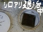 シロアリ退治中.jpg