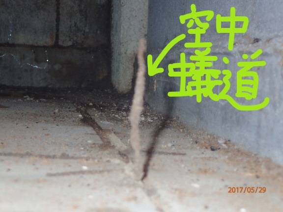 Inked空中蟻道_LI.jpg